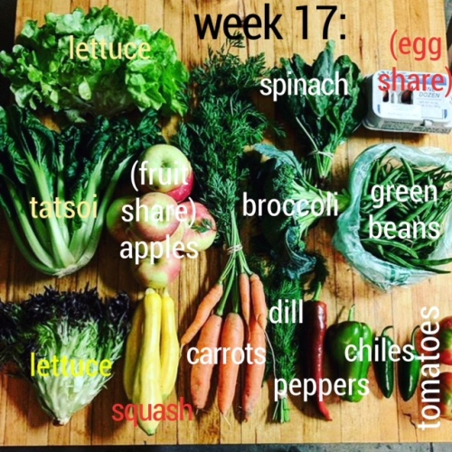 week17-2.JPG